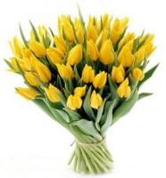 тюльпан -90 р.-разные цвета