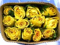 High yellow  от 140 р/шт
