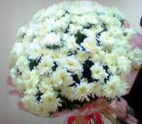 25 хризантем кустовых-3800 руб.